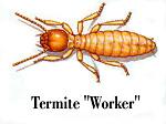 Termite worker - photo#9